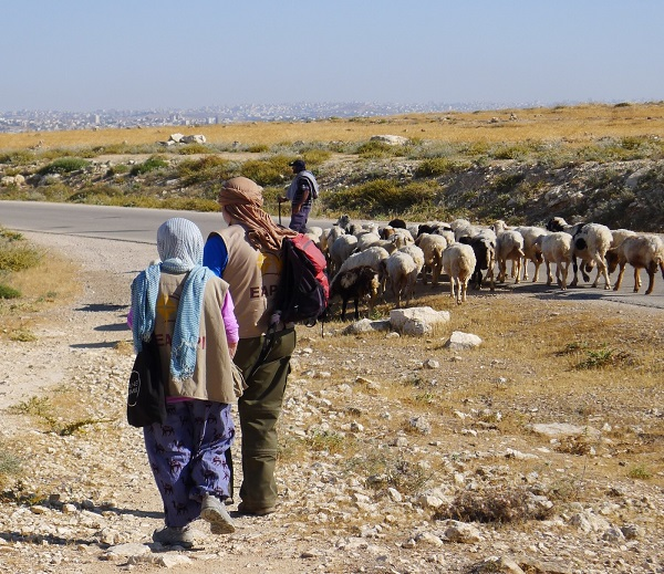 Ecumenical Accompaniers like Ann travelling with a shepherd in the South Hebron Hills.